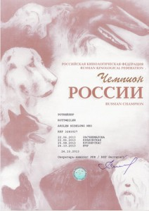 CH RUSSIA ROTTWEILER (1)